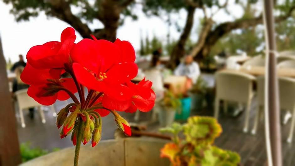 Muhtarın Yeri Cafe Restaurant Alanya Kalesi (22)