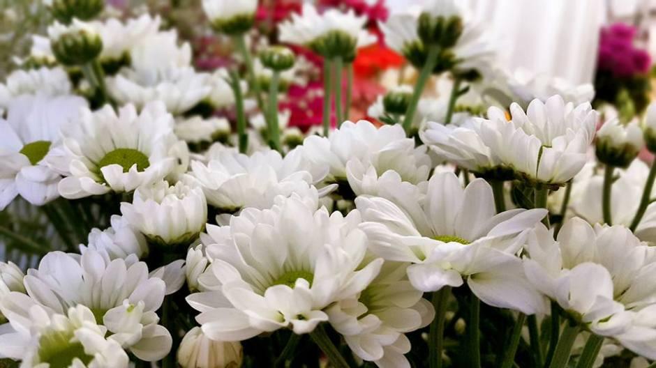 Antalya Online Çiçek Sipariş - 0538 9692901 Gülşen Çiçek Evi (28)