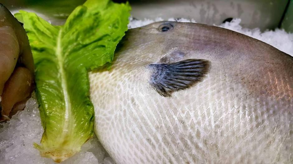 Ekici Restaurant - 0242 2484142 antalya kaleiçi yat limanı mekanlar restaurant bar balık evi (15)