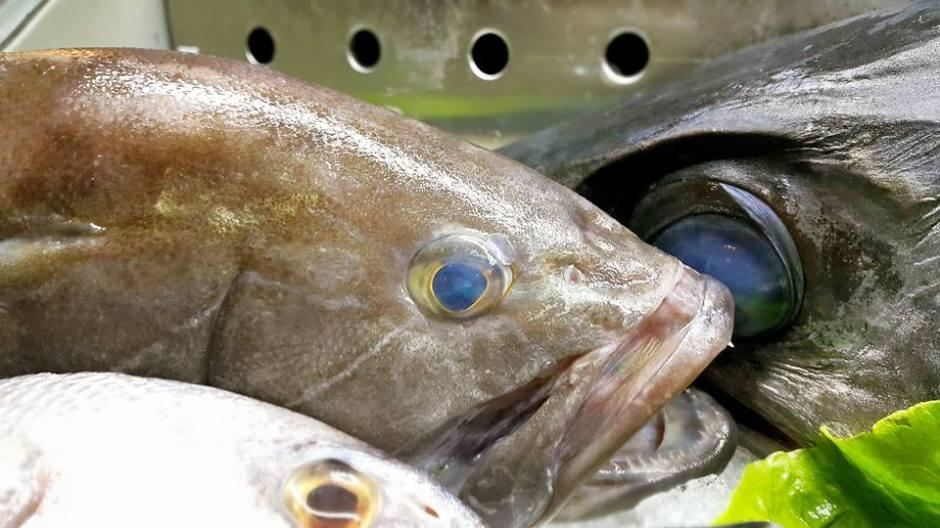 Ekici Restaurant - 0242 2484142 antalya kaleiçi yat limanı mekanlar restaurant bar balık evi (20)