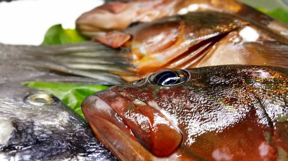 Antalya Deniz Ürünleri Restoranı 0242 248 4142 antalyada balık restoranı antalyada balık nerde yenir antalya balık evi antalya calı müzikli restoran (9)