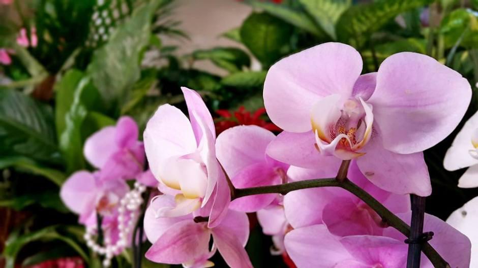 antalya çiçek sipariş 0242 3453210 çiçek gönderme orgil çiçekçilik (14)