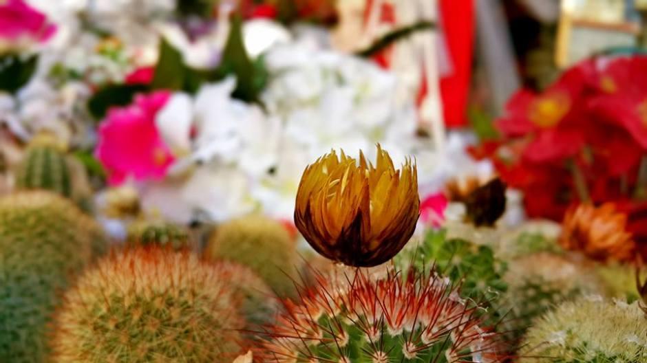 antalya çiçek sipariş 0242 3453210 çiçek gönderme orgil çiçekçilik (19)
