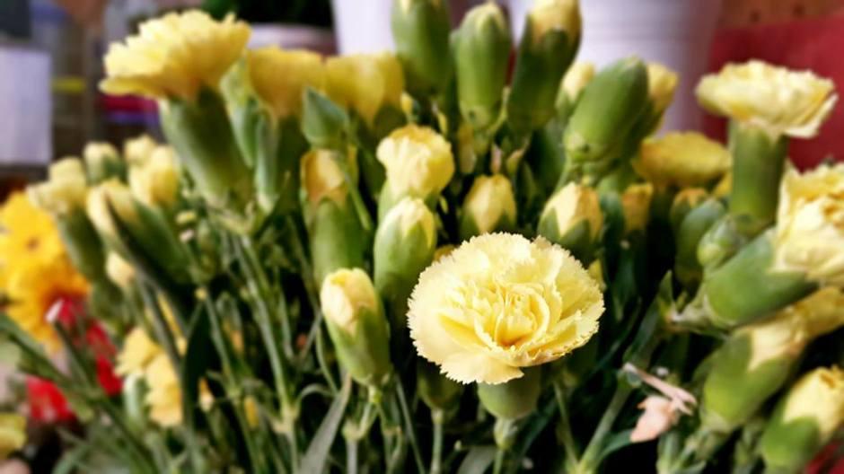 antalya çiçek sipariş 0242 3453210 çiçek gönderme orgil çiçekçilik (7)