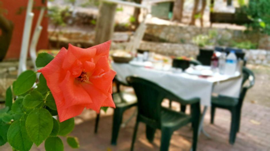 meselik-restaurant-antalya-balik-restorani-antalya-zengin-kahvalti-en-iyi-lokantalar-10